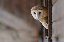 Kent Owl Academy