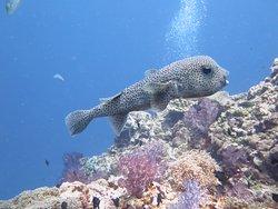 Dive Link Phuket