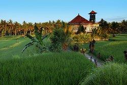 Subak Juwuk Manis (Ubud Rice Field)