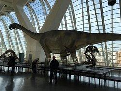Museum of Natural Science (Museo de Ciencias Naturales)