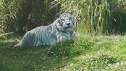 Parque Zoologico Guátika