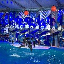 Riviera Dolphinarium