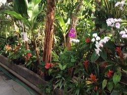 Shimokamo Tropical Garden