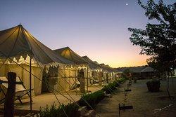 Tents at dawn