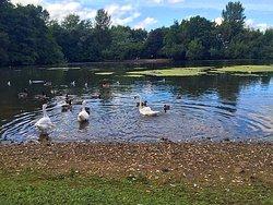 Westport Lake