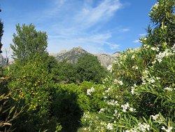 Wunderschöner parkähnlicher Garten mit Blick auf das Tramuntana Gebirge