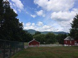 Glen Brook Farm Is Amesome.