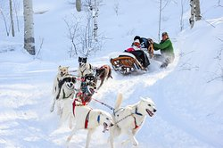 Krabloonik Dogsled Rides