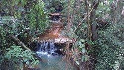 Bosque Zequinha de Abreu