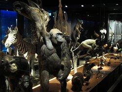 Musée d'histoire naturelle Fribourg