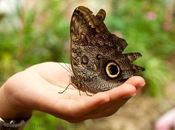 Columbia River Co-operative - The Belize Butterfly Collective