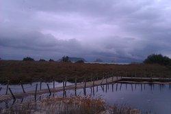 Invierno tormentoso en els Aiguamolls de l'Empordà igualmente hermoso