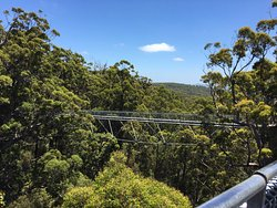 Valley of the Giants Tree Tops Walk