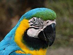 Pantanal Ecoverde Tours
