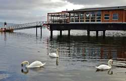 Favourte hangout for swans. We have seen as many as 17 in the Bay.