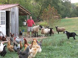 Open Gate Farm