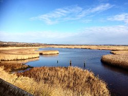 Farlington Marshes Wildlife Reserve