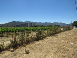 Quintay Vineyards