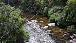 Trout spotting from suspension bridges along Thredbo Valley Track