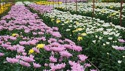 BigTae Garden