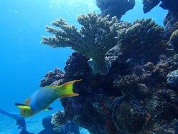 Churaumi Diving Center
