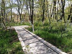 Nariman Narimanov Park