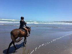 Surf & Turf Horse Riding Raglan
