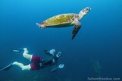 Fathom Freedive Bali