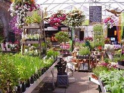 Urban Plant Life