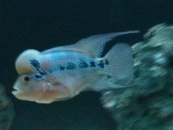 Ganga Aquarium