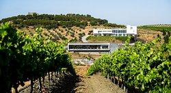 Vista da vinha - Vineyard view