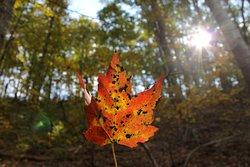 Fall on the ridge.