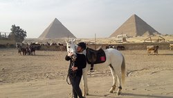 Cairo Horse Riding School