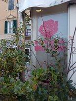 B&B Le Rose