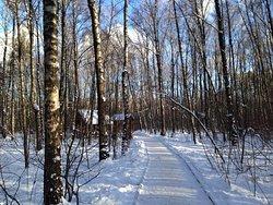Troparevsky Forest Park