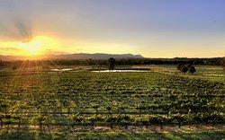 Allandale Winery