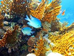Anthias Divers, Sharm el Sheikh