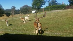 Springfield Deer Farm