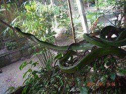 ฟาร์มงูและศูนย์ฝึกลิง