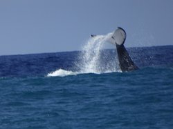 Ocean Spirit Diving Services