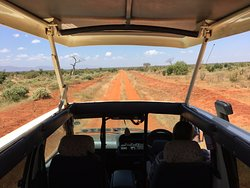 PD Tours and Safaris