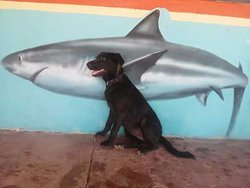 My dog Frida loves sharks !!