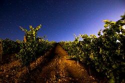 Vinha pela noite estrelada - Night view in the vineyard