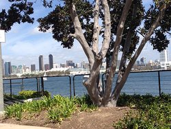 Loved this hotel! Good Restaurant on site, Amazing Location, Quiet, Beautiful Views of San Diego, Walk ability factor!