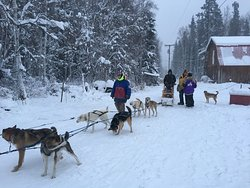 Cotter's Sled Dog Tours
