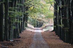 Natuurmonumenten-route Planken Wambuis