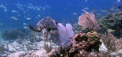 Manta Divers Cancun