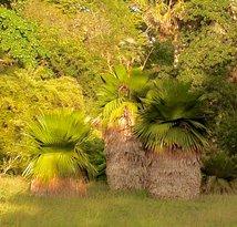 Jardin Botanico Soledad de Cienfuegos