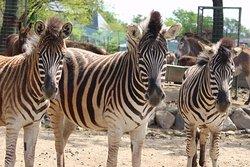 Nasu Safari Park