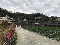 Yi Xiang Yuan Leisure Farm